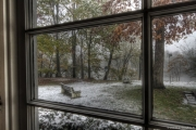 Early October Snow 03