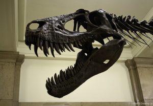 Hall of Dinosaurs!
