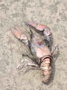 Dead Things Part 2 – Riverfront Park Crayfish